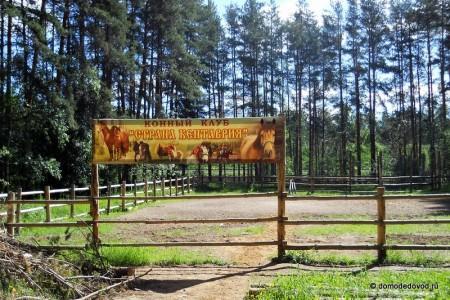 Конный клуб в Елочках