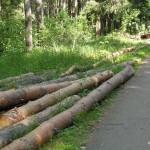 Вырубленные деревья