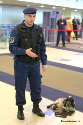 Кинологи в аэропорту Домодедово