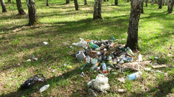 Вот так выглядит мусор в лесу…