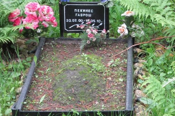 Покойся с миром, пекинес Гаврош