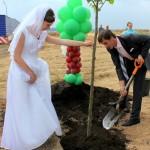 Молодожены сажают дерево на Аллее профессий в Новом Домодедово