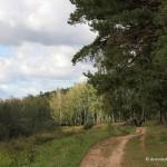 Домодедовские леса