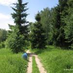 Лес в Домодедово