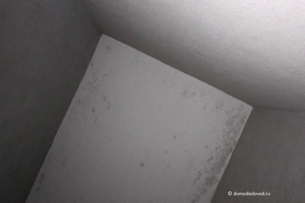 Плесень и грибок на потолке
