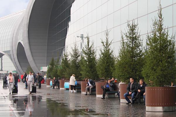 Еловая аллея перед аэропортом Домодедово