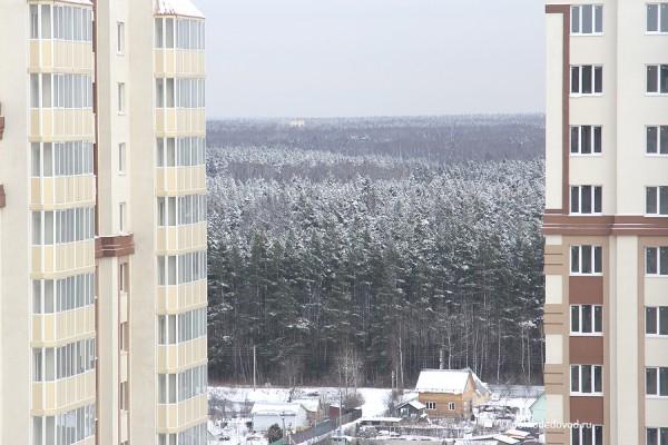 Вид на прекрасный лес из Нового Домодедово