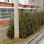 Ёлочки возле новостройки Гюнай по ул. Гагарина, 58