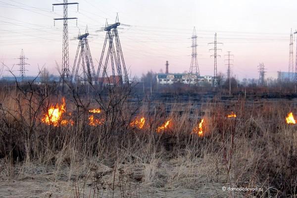 Выжигание сухой травы в Домодедово