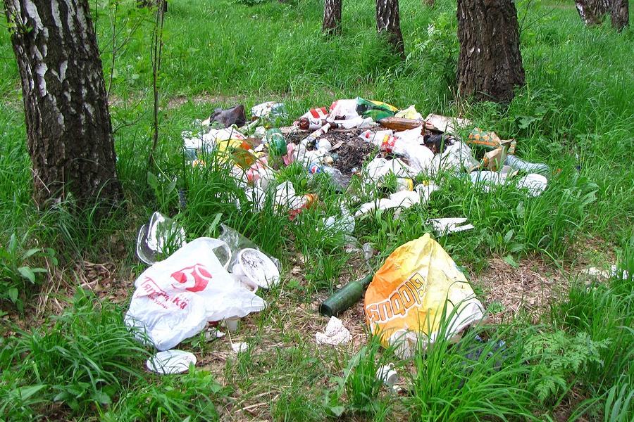 мусора лесу рисунок в
