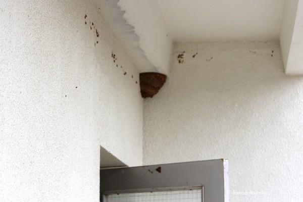 Ласточкино гнездо.