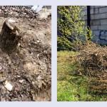 Штрафы за вырубку деревьев и сжигание мусора