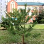 14 мая пройдет акция «Лес Победы»