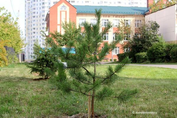 Акция «Посади дерево» в школе №4