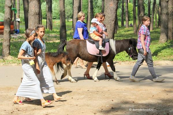 Лошади в парке Елочки