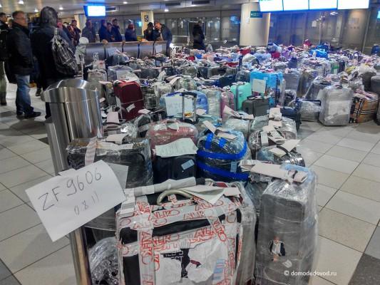 Багаж из Египта в Домодедово