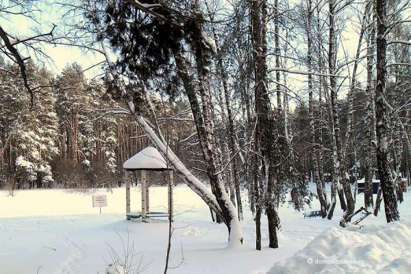"""Парк """"Ёлочки"""" в Домодедово"""
