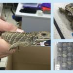 170 экзотических животных в одном чемодане