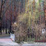 Прогулка в весеннем парке «Ёлочки»