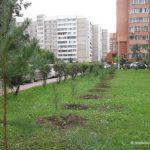 Наш лес. Посади свое дерево. Итоги акции
