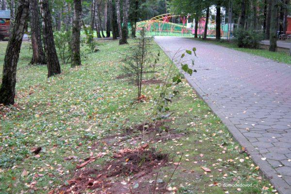 Наш лес. Посади свое дерево
