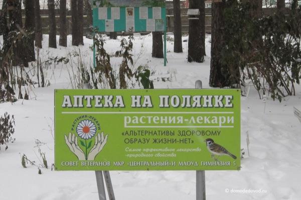 Парк «Ёлочки» зимой (16)