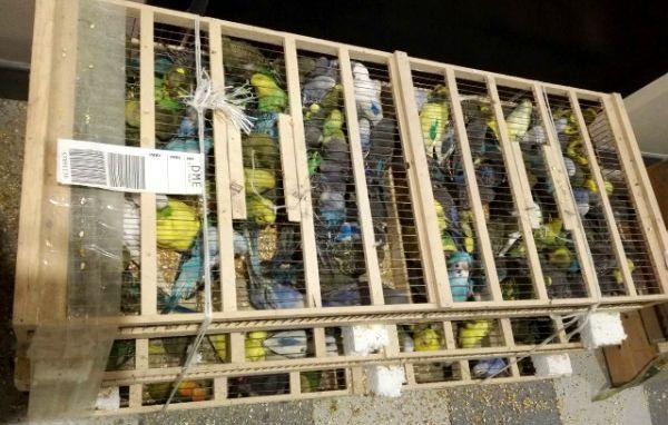 Птицы были изъяты в аэропорту Домодедово