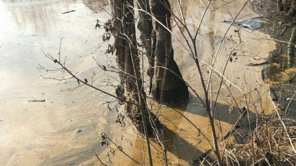 Росприроднадзор взял пробы на месте разлива нефтепродуктов в Домодедово