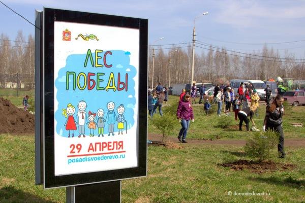 Лес Победы в Домодедово