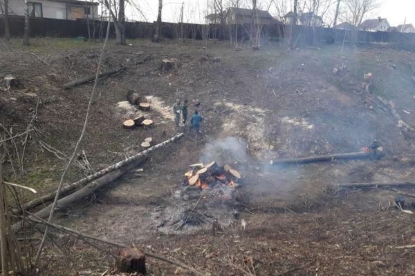 Сжигание порубочных остатков в Белых Столбах