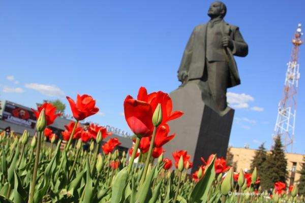 Тюльпаны в Домодедово. Памятник Ленину