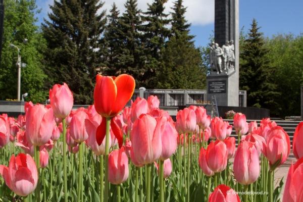 Цветы в Домодедово. Обелиск Славы