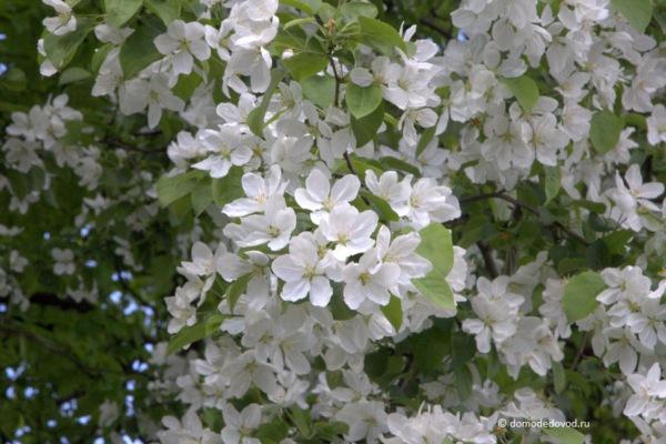 Цветы в Домодедово