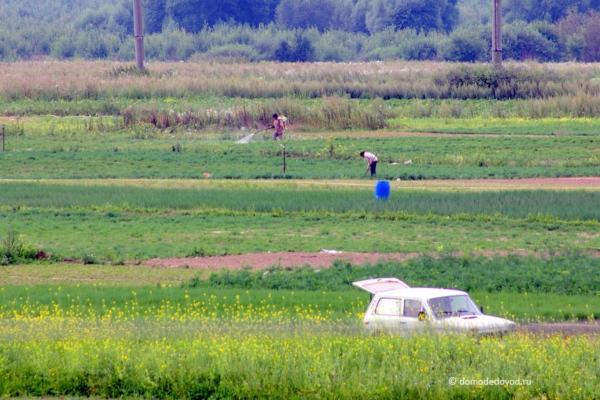 Рабочие на полях