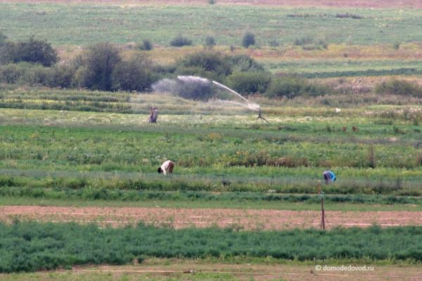 Незаконный полив полей водой из реки Рожайка в Домодедово