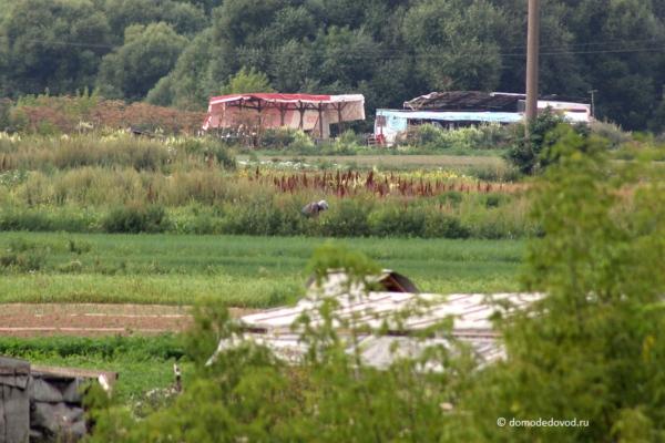 Хозяйство на полях в Домодедово