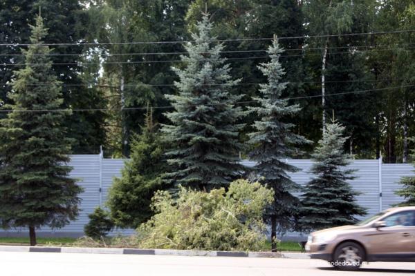 На Каширском шоссе вырубают деревья