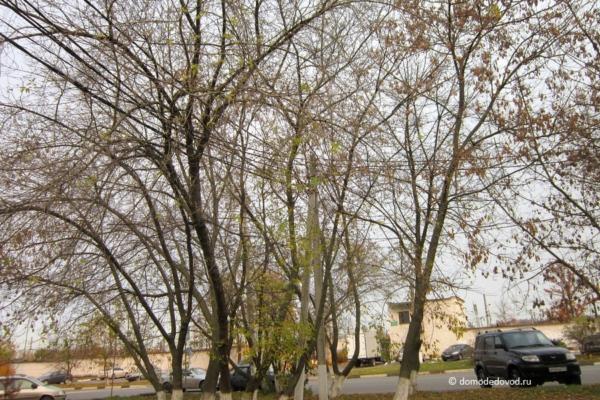 Провода в деревьях