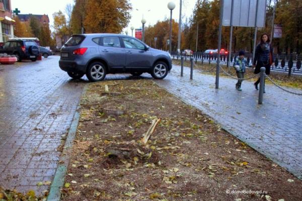 Вырубка деревьев. Каширское шоссе, 49