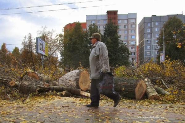 Вырубка деревьев. Каширское шоссе, 83