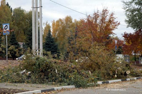 Вырубленные деревья у Каширского шоссе