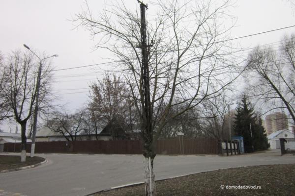 Дерево, проросшее сквозь столб