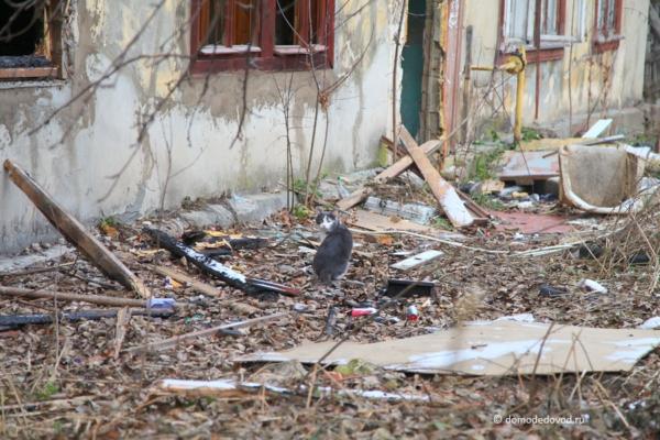 Заброшенные дома на ул. Текстильщиков в Домодедово. 27.11.2017
