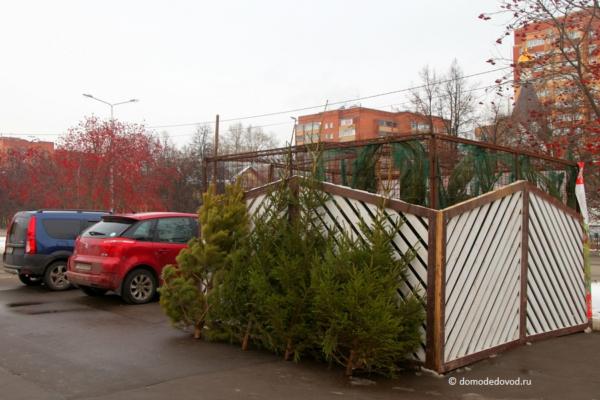 Новогодние елки в Домодедово