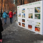 Проекты парка «Ёлочки» на 2018 год