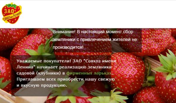 Сбор клубники в совхозе имени Ленина