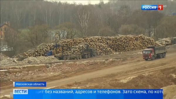 Вырубленный лес в Домодедово