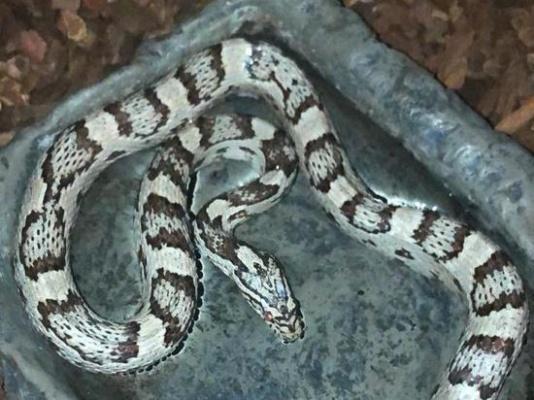 Змея. Фото: МК