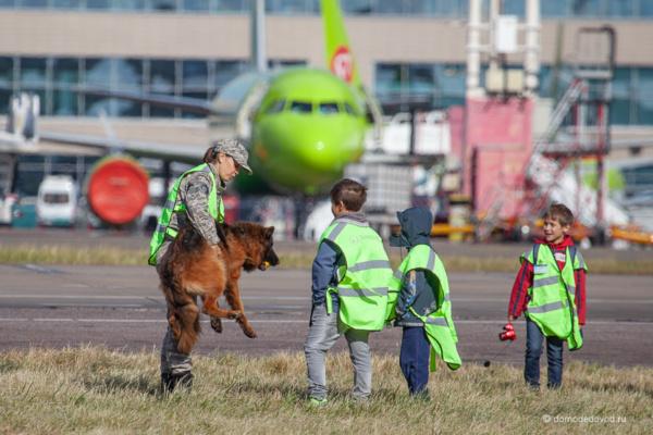 Овчарка Анка в аэропорту Домодедово