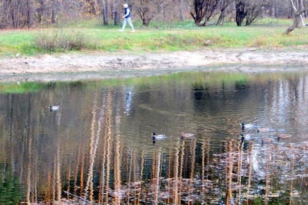 Пруд в парке «Ёлочки»